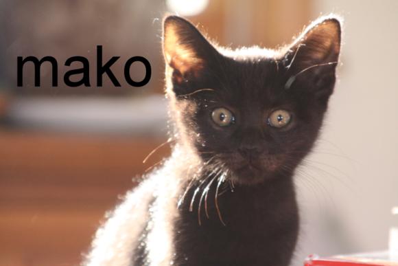 Kitcat3