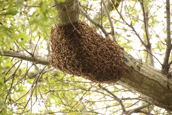 Swarm02
